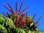Fleurs de Nouvelle Calédonie