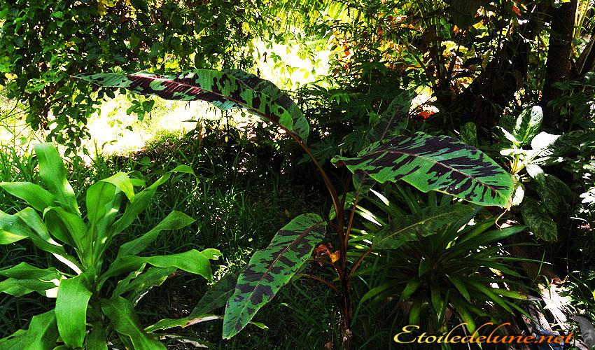 image_nouvelle_caledonie_fleurs (10)