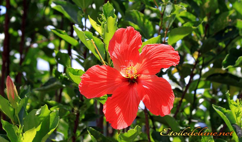 image_nouvelle_caledonie_fleurs (21)
