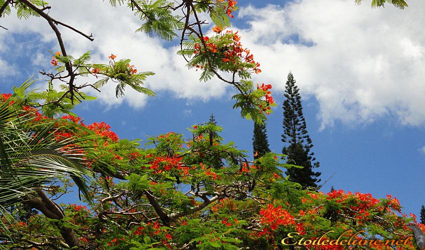 image_nouvelle_caledonie_fleurs (22)