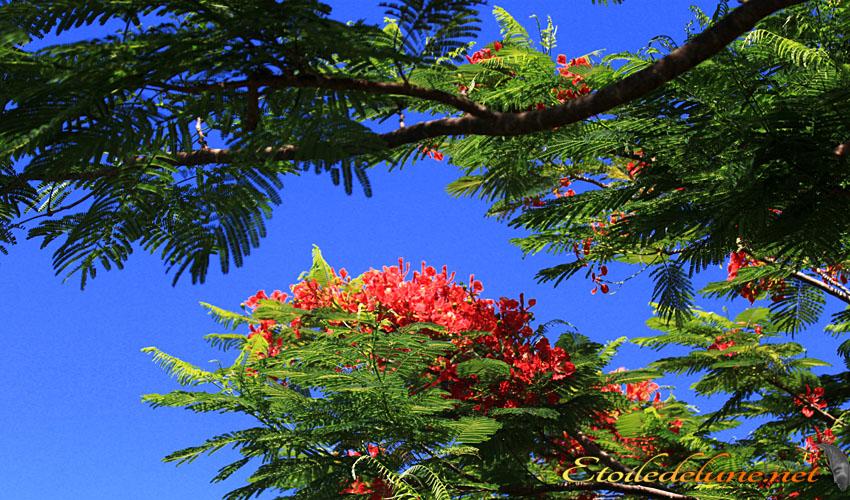 image_nouvelle_caledonie_fleurs (25)