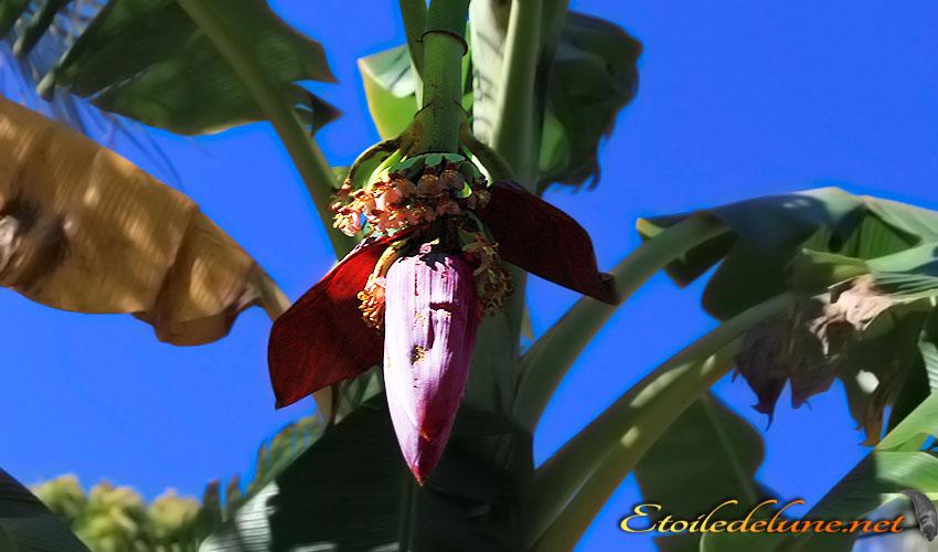 image_nouvelle_caledonie_fleurs (31)