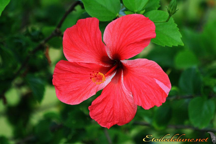 image_nouvelle_caledonie_fleurs (40)