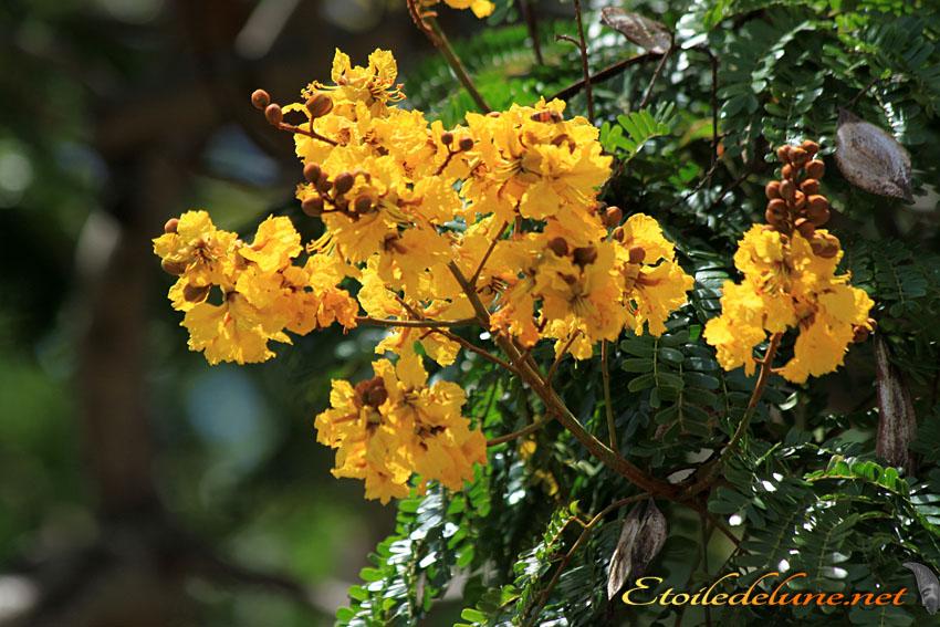 image_nouvelle_caledonie_fleurs (5)