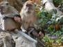 Asie : la faune