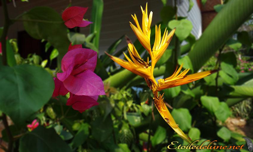 Paradis et Bougainvillee_Fb