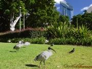 Sydney_hide parc_01