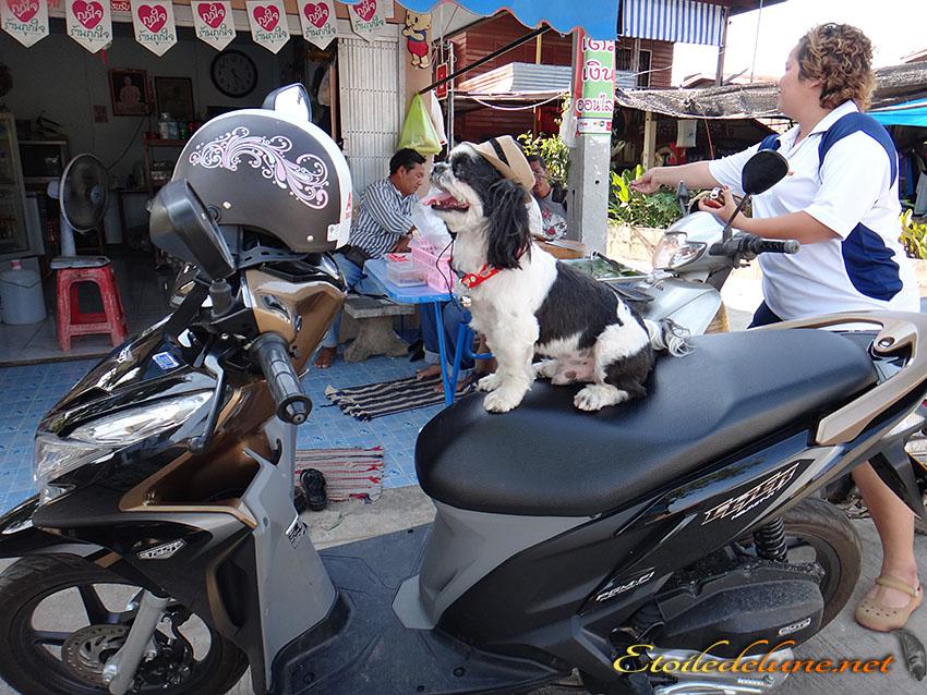 MOYENS DE LOCOMOTION_THAILANDE (40)
