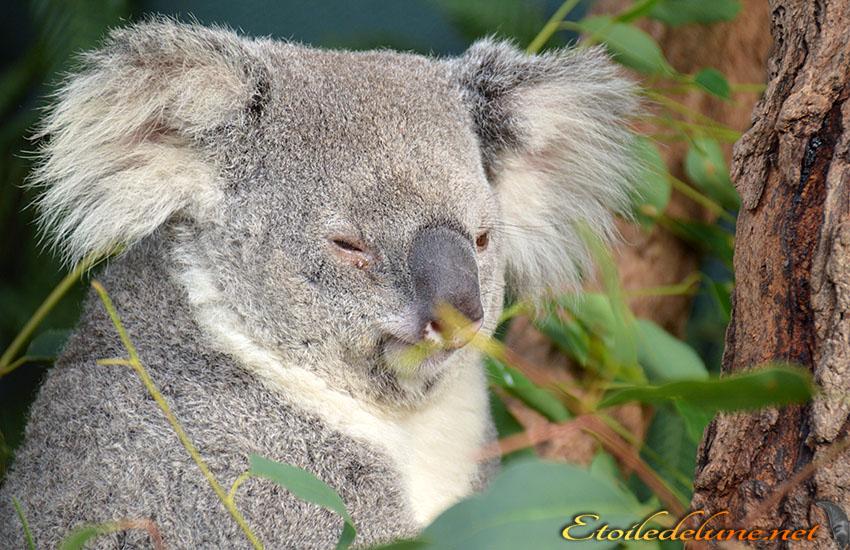 AUSTRALIE_faune_ (50)