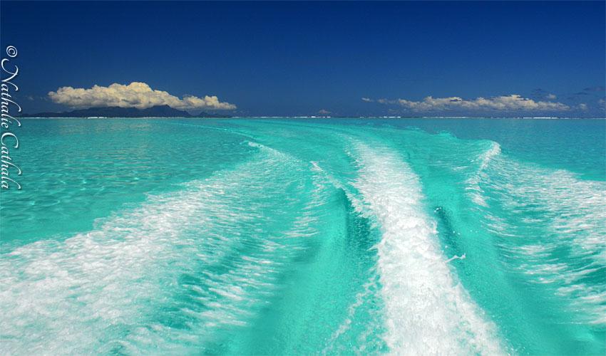 tour en bateau lagon bora bora (30)