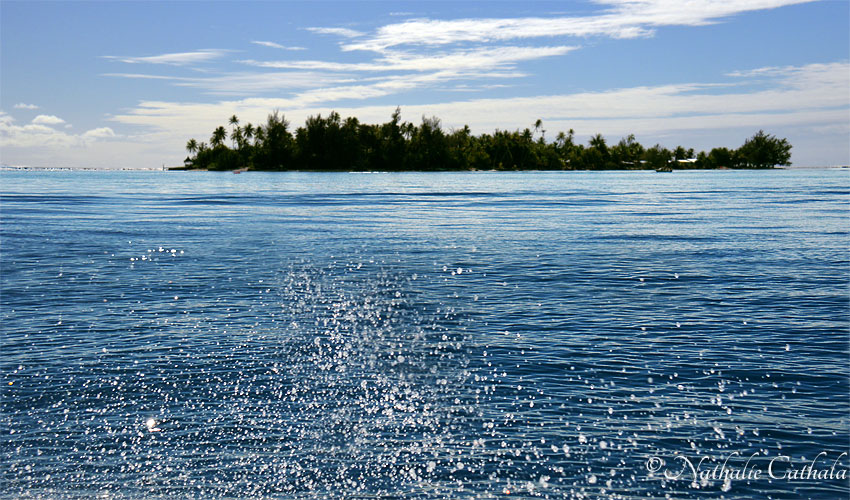 tour en bateau lagon bora bora (49)