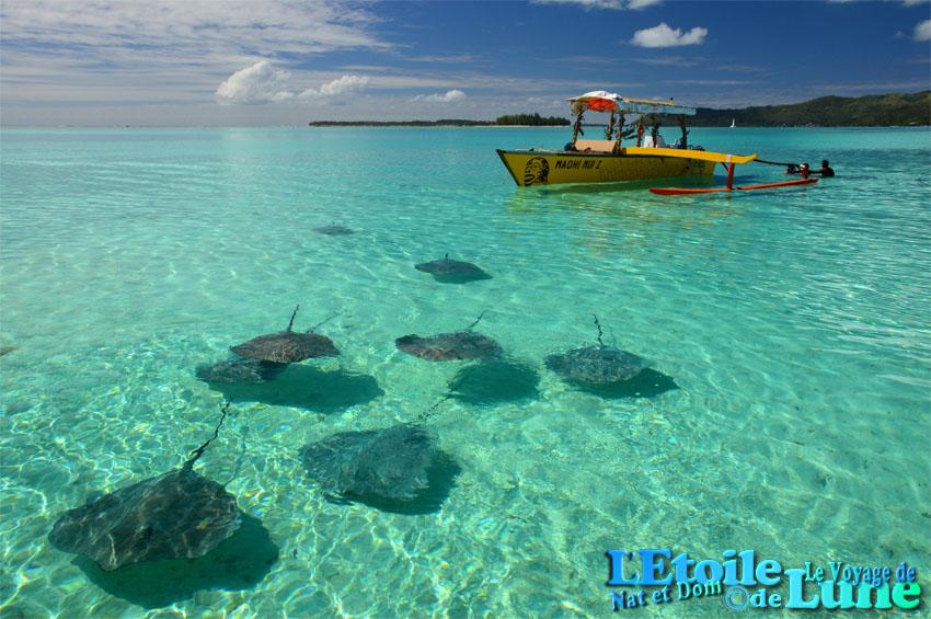 tour en bateau lagon bora bora raies (2)