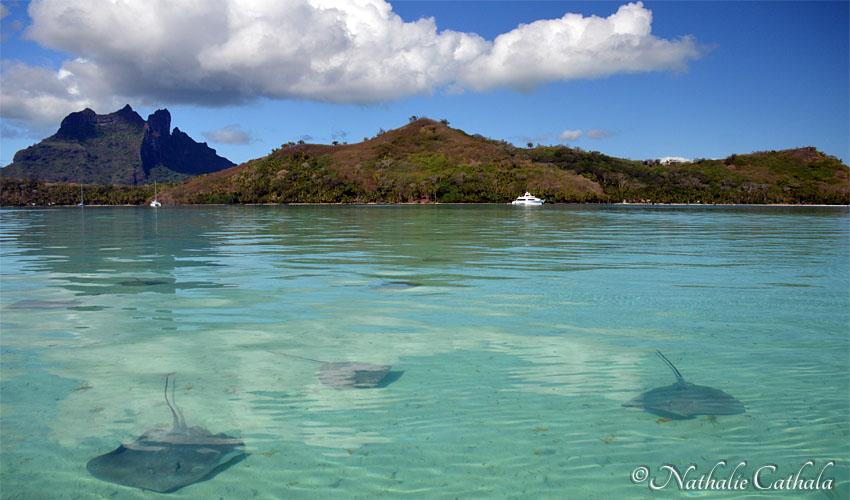tour en bateau lagon bora bora raies (4)