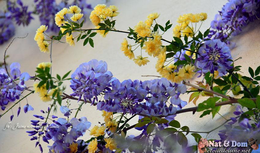 les-fleurs-de-printemps-13