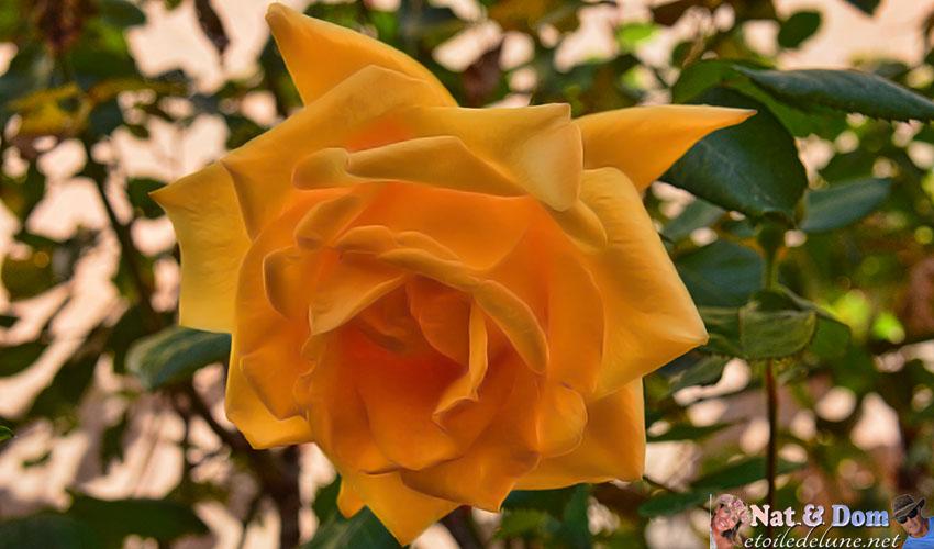 les-fleurs-de-printemps-14
