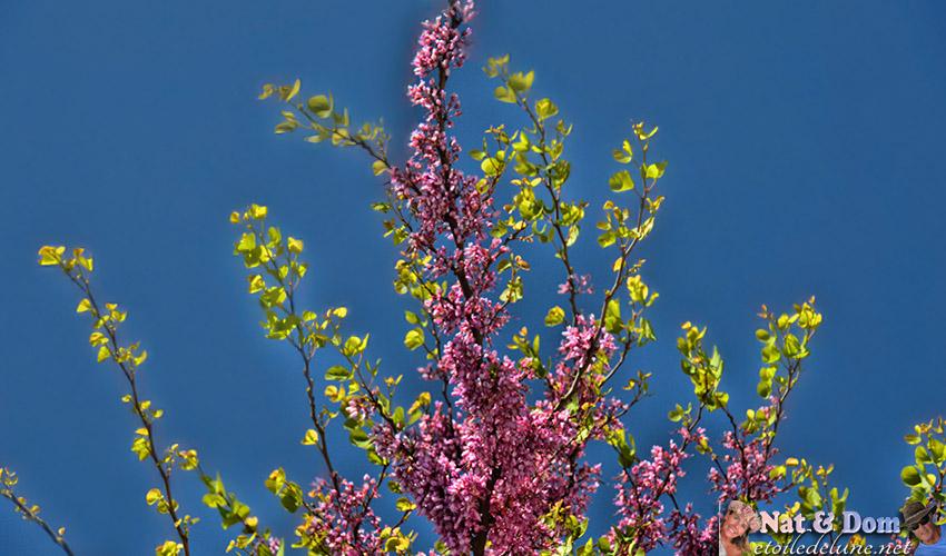 les-fleurs-de-printemps-16