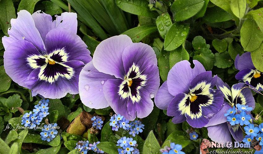 les-fleurs-de-printemps-2