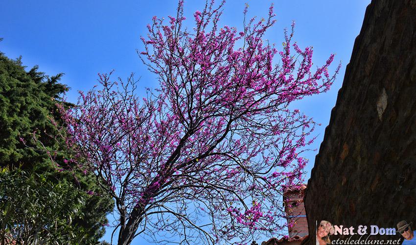 les-fleurs-de-printemps-20