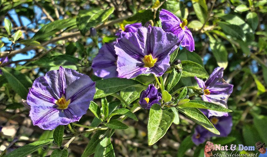 les-fleurs-de-printemps-3