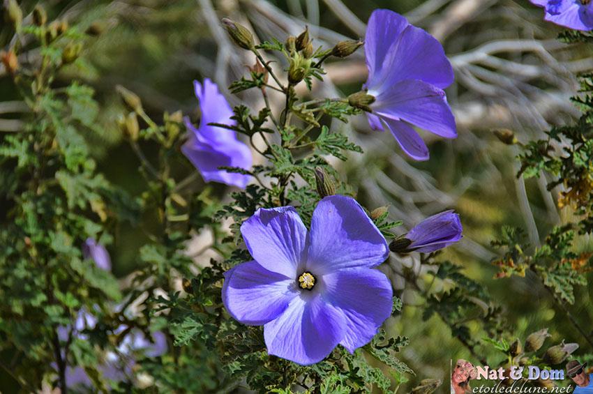 les-fleurs-de-printemps-5