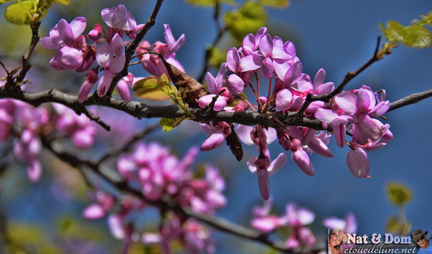 les-fleurs-de-printemps-6
