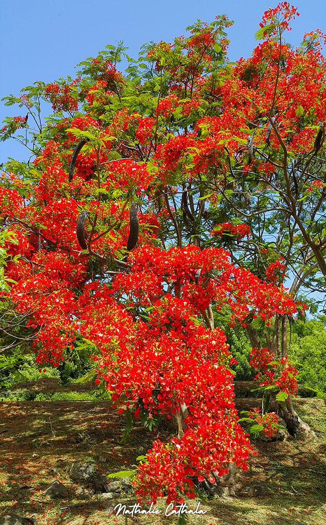 végétation enflammée