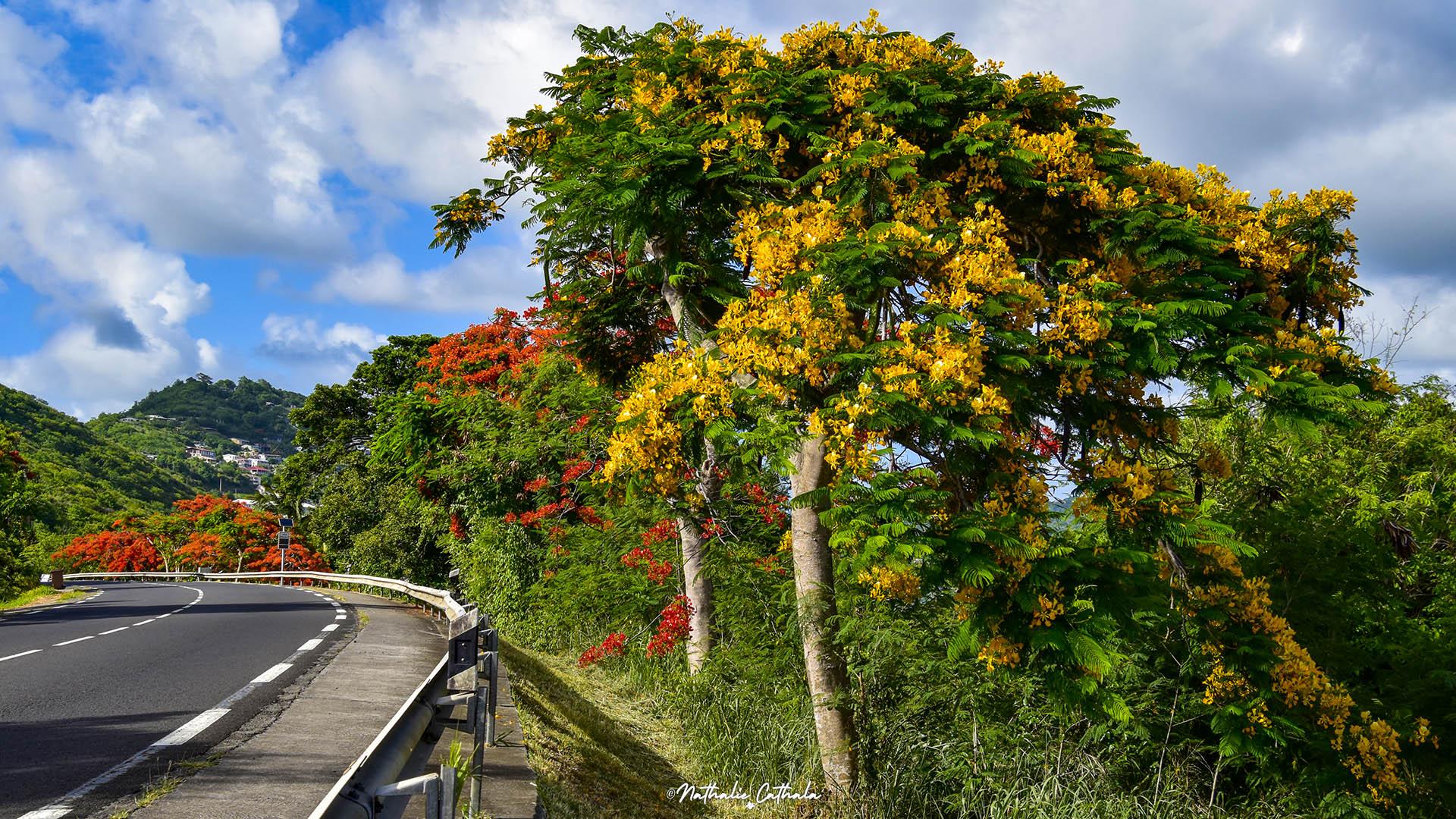 Route du Marin