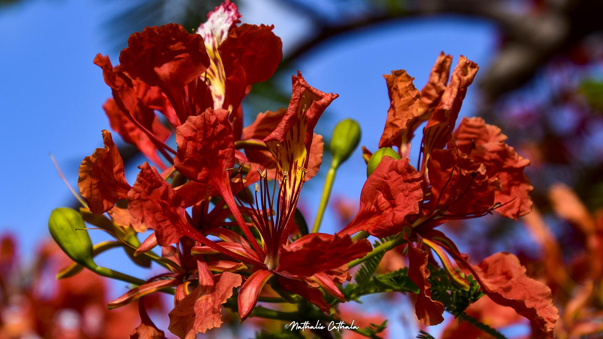 Fleur symbole du paradis