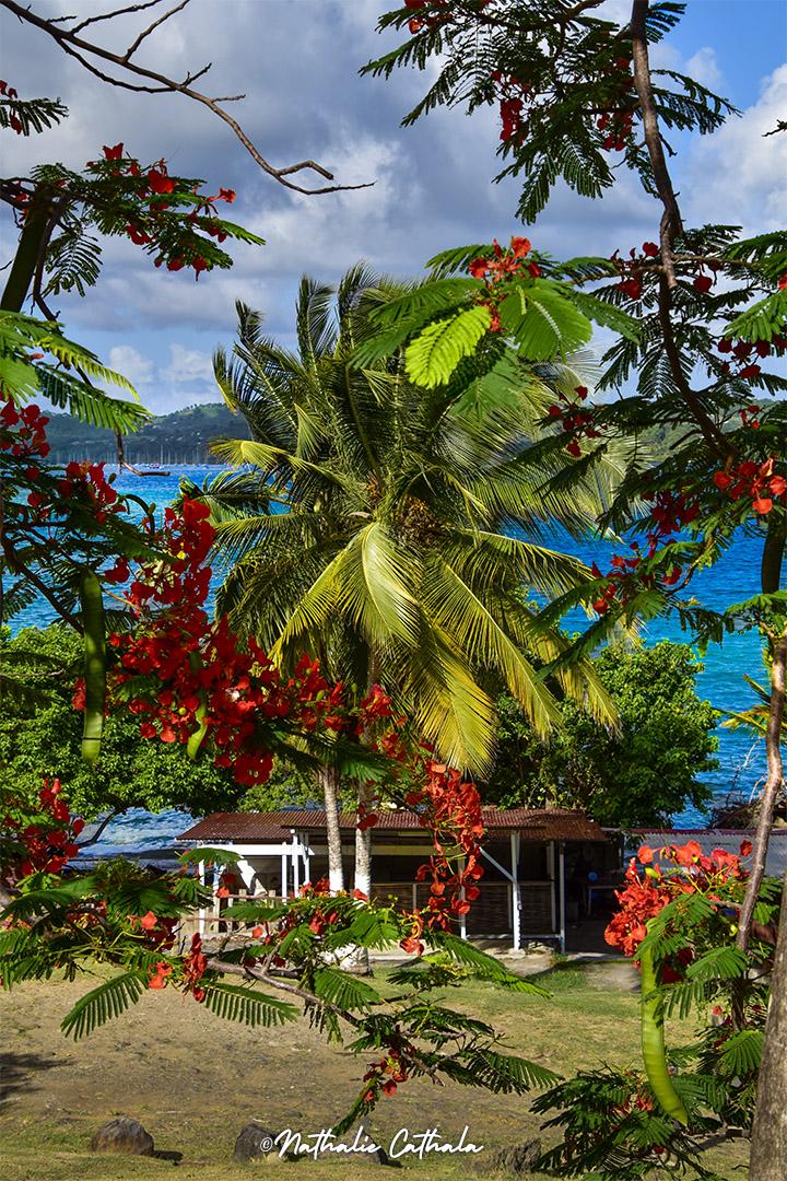 Cocotier et flamboyant, les Tropiques résumés