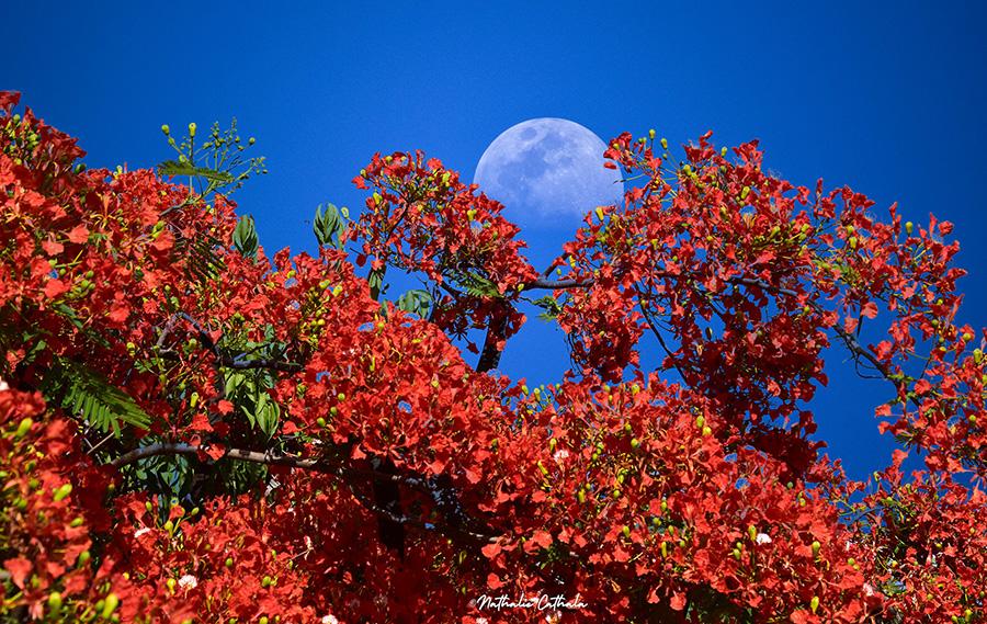 Lune flamboyante