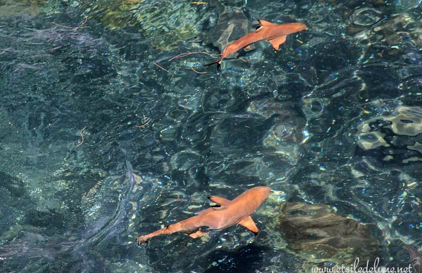Tanna: L'antre des requins Pointe-Noire