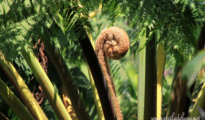 VANUATU : étonnante nature utilisée par l'homme
