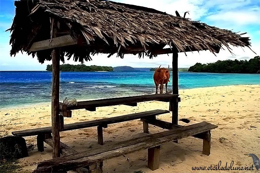 VANUATU : quelques photos supplémentaires…