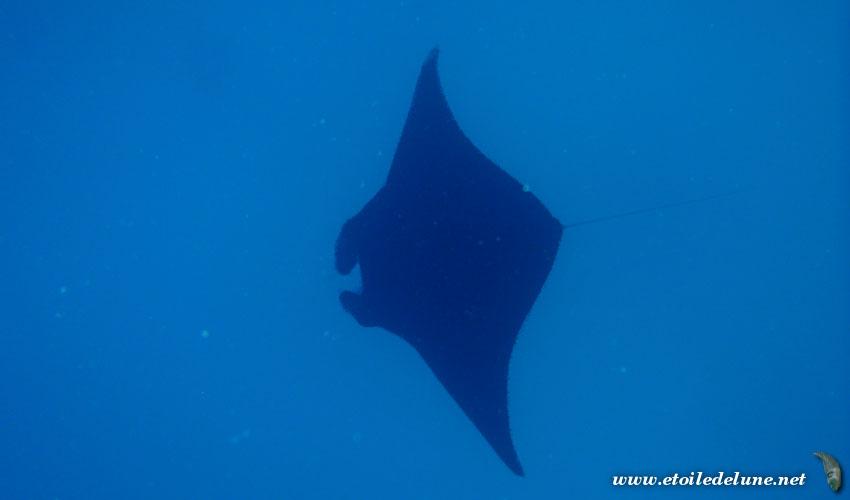 FIJI : Yasawa, Naviti, balade sous-marine