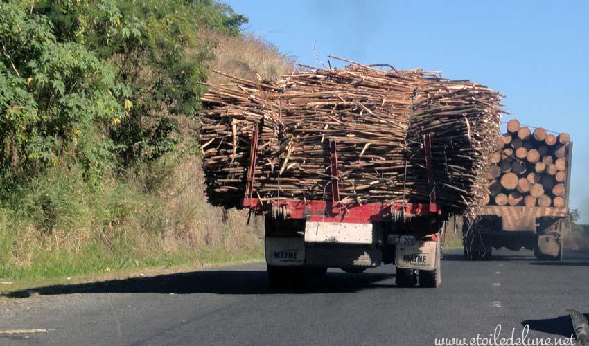 FIJI : VITI LEVU, la canne à sucre