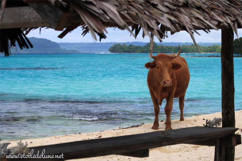 VANUATU : photos de Port Olry