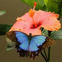 Fleurs de Nouvelle-Calédonie