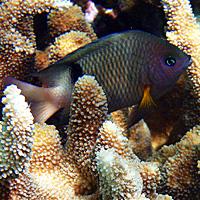 Petits… gros poissons et … jolis fonds