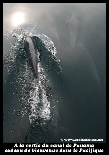 rencontre dauphin moorea