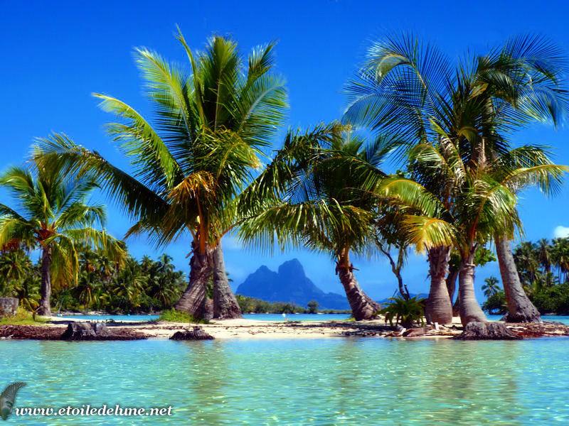 TAHA'A : le jardin de corail, paradis sur l'eau