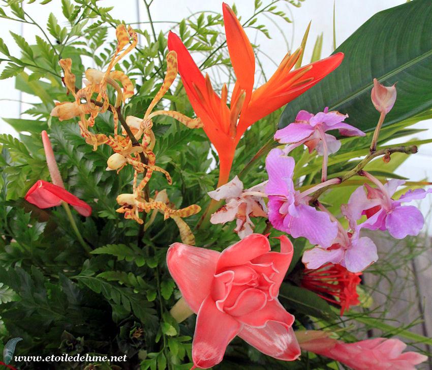 WALLIS générosité florale