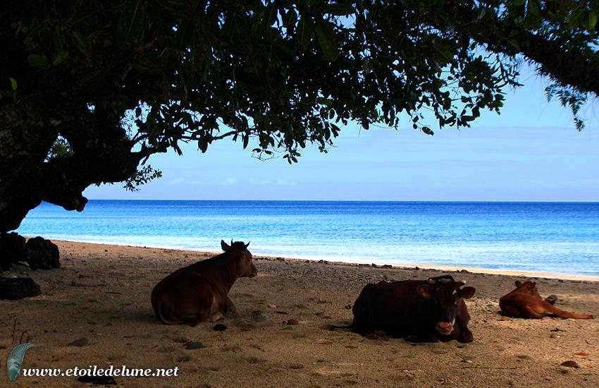 VANUATU : un rivage entre océan et rivières