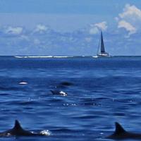 MOOREA : dauphins abonnés au lagon