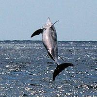 MOOREA dauphins joueurs