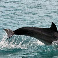 de Moorea à Tahiti – baleines et dauphins