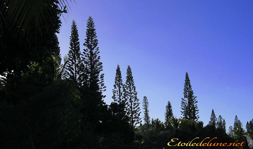 La flore de l'île des Pins
