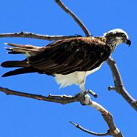 Oiseaux de l'île des Pins