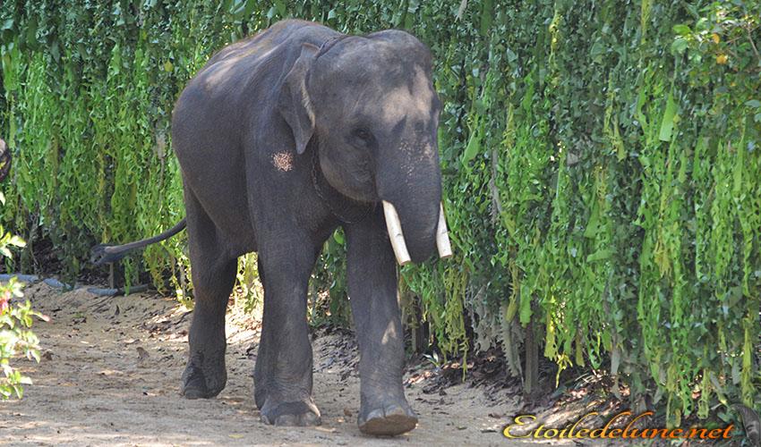 Mes chouchous, les éléphants