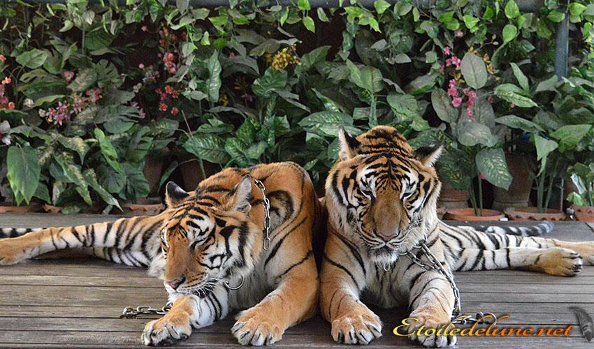 Pôv bêtes…