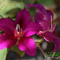 Les jardins de Bora